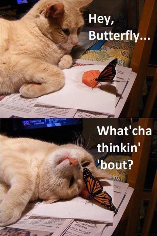 Hey Butterfly Cat