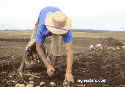 "How do I say ""Vá Plantar Batatas"" in English?"