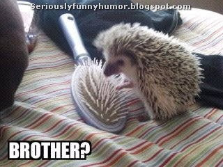Hedgehog and hair brush - brother?!? :p