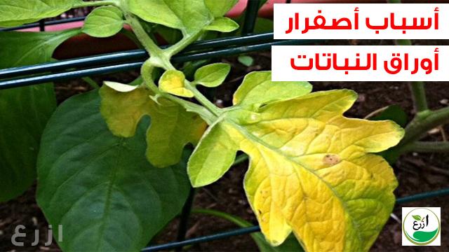 أسباب اصفرار أوراق النباتات و الأشجار