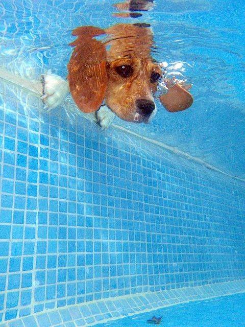 peek a pool