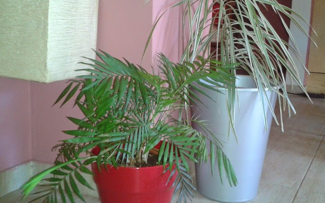 Φυτά, για καθαρή ατμόσφαιρα στο σπίτι!