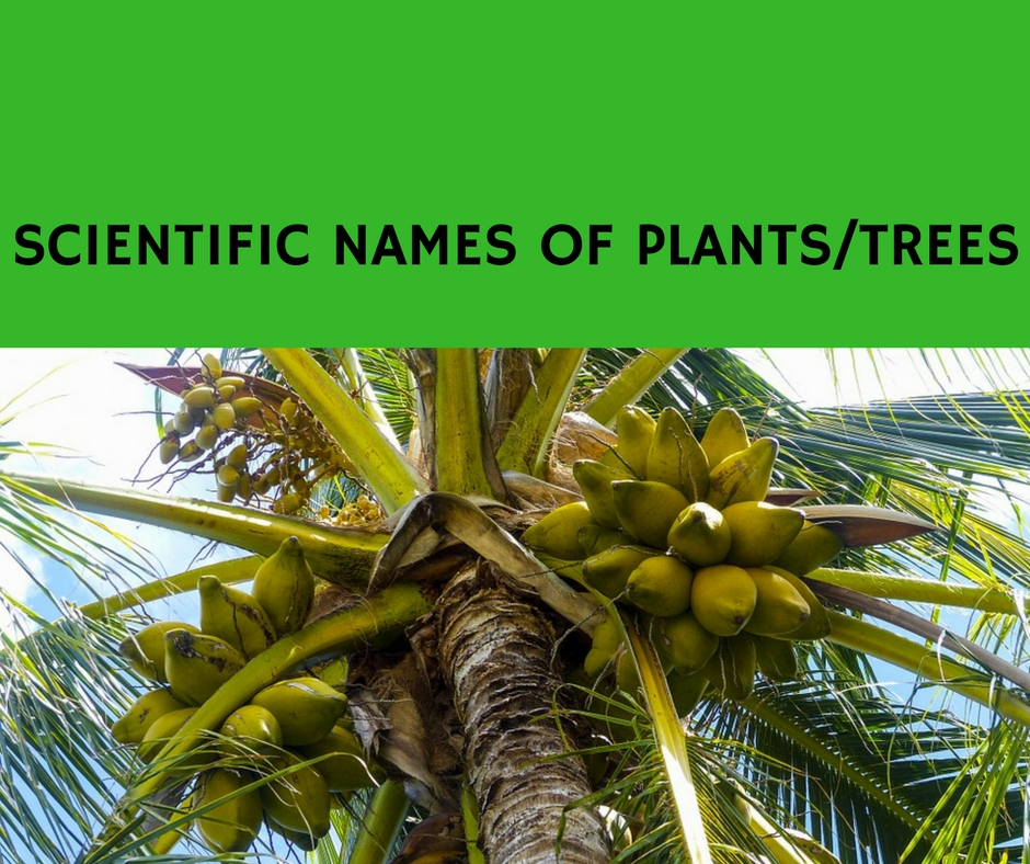 All About Scientific Names Of Plants Listed Alphabetically The