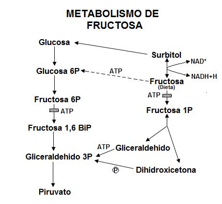 Lo que Warren Buffett le puede enseñar sobre Dieta cetogénica