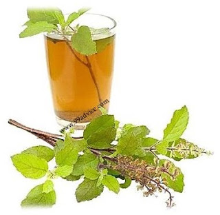 जानिए क्यों है तुलसी का पौधा स्वास्थ्य के लिए लाभकारी?