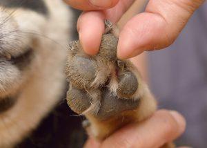 dedos dos cães