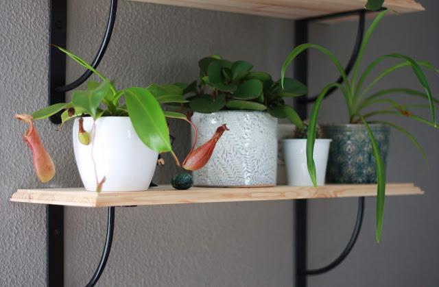 etagere-vegetale