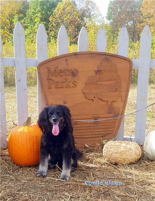 Fall activitiy ideas with your dog