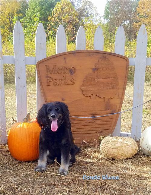 condo blues lacey dog