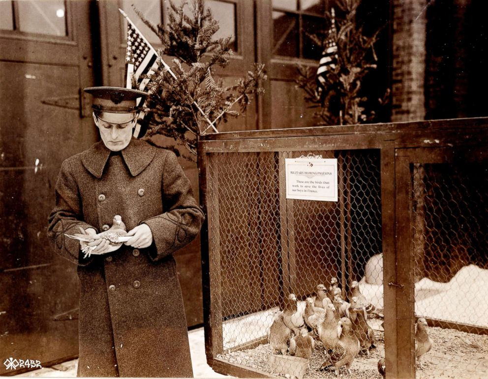 2nd Lt. Milne pictured in 1918 with carrier pigeons he is raising for the Army during World War I.