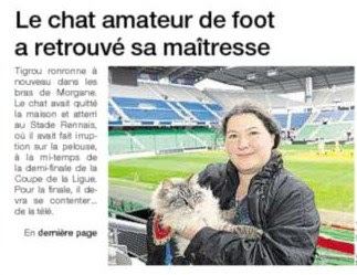 chat amateur de foot