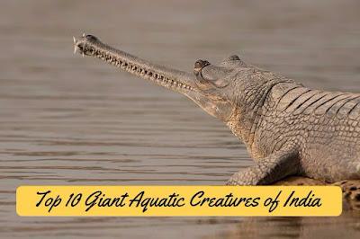 Top 10 Giant Aquatic Creatures of India