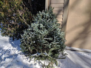 Christmas tree collection days are scheduled for the week of January 8, 2018