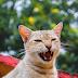 Πόσα δόντια έχουν οι γάτες;