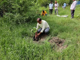 भगवान अवधूत के अवतरण दिवस पर हुआ वृहद पौधरोपण   #NayaSaveraNetwork