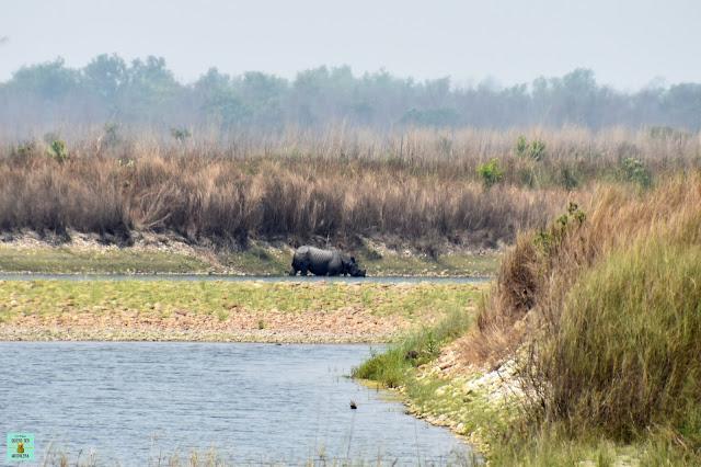 Rinoceronte en Parque Nacional de Bardia, Nepal