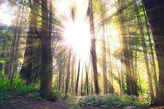 Лучи солнца стихи