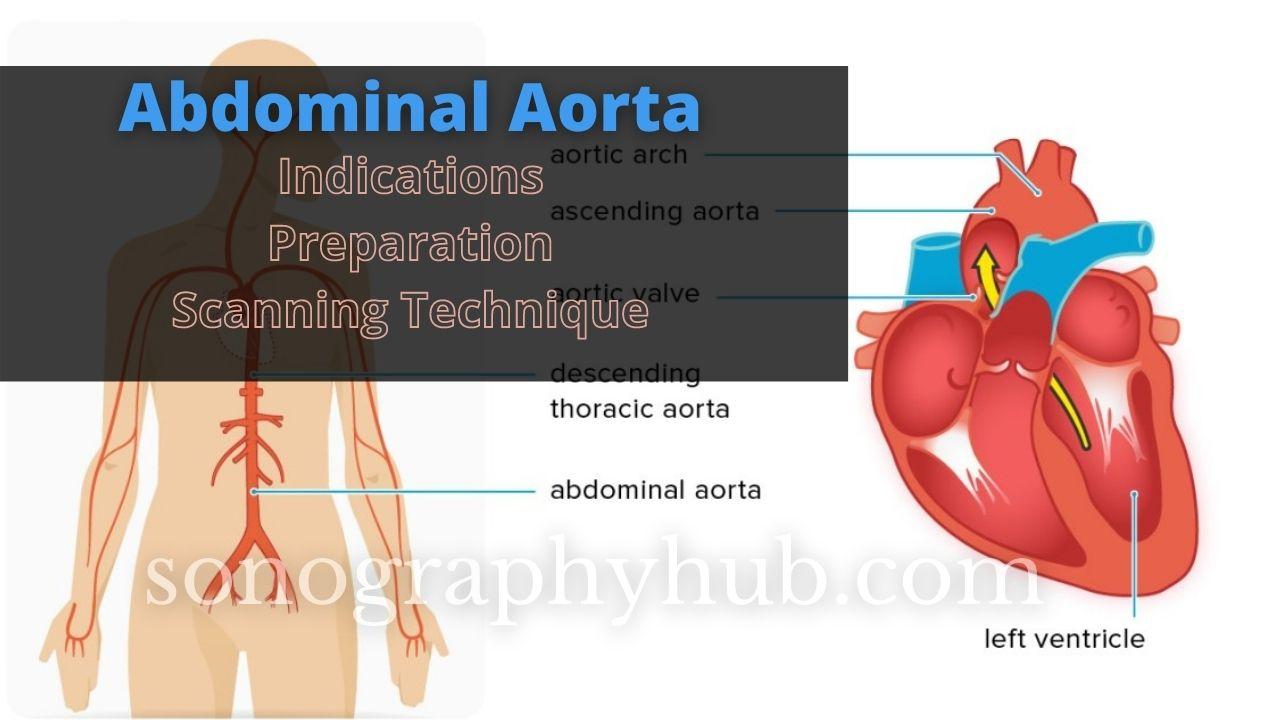 Abdominal aorta ultrasound scan