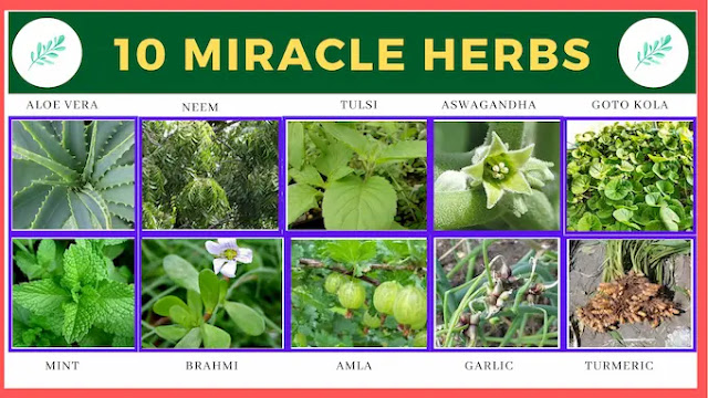 Miracle herbs to guard your health