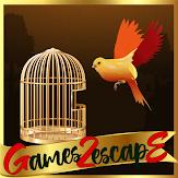 G2E Orange Parakeet Rescue