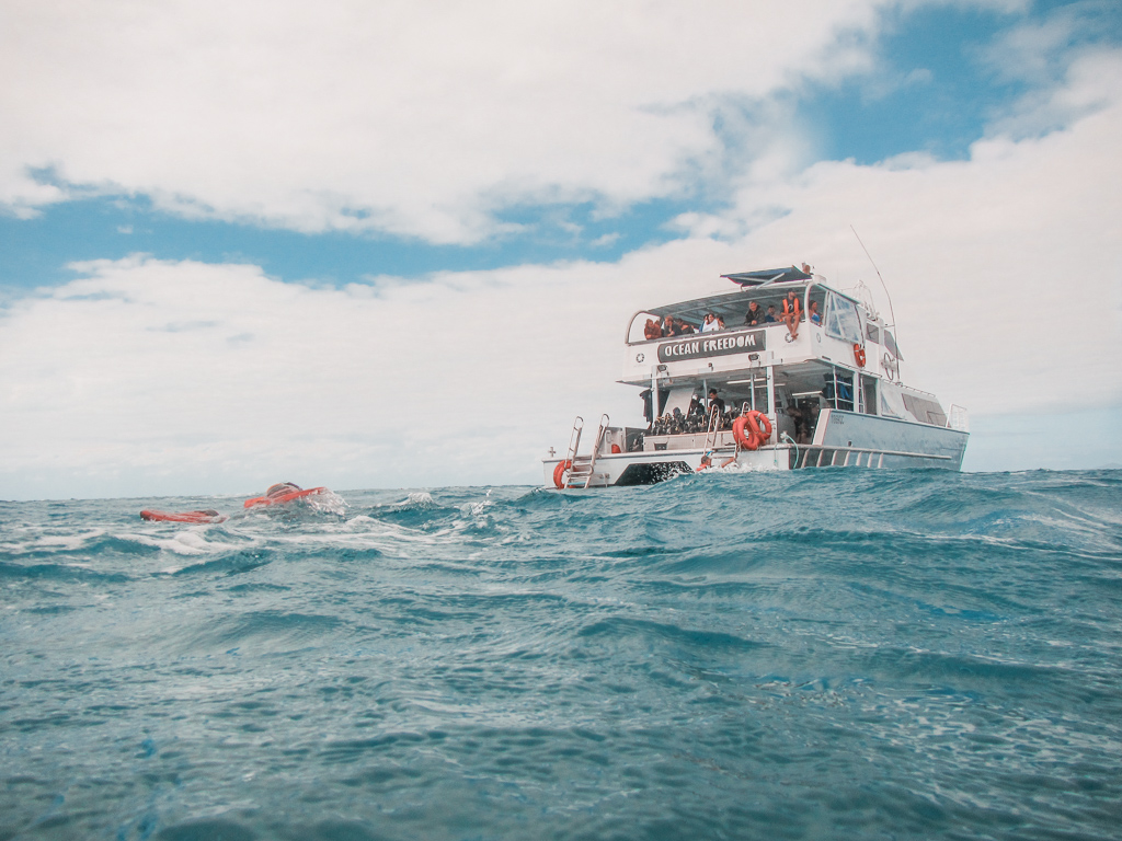 great barrier reef snorkling tour