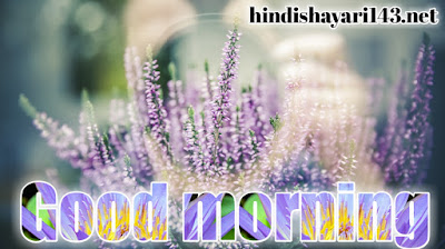 good morning flowers photos for free download