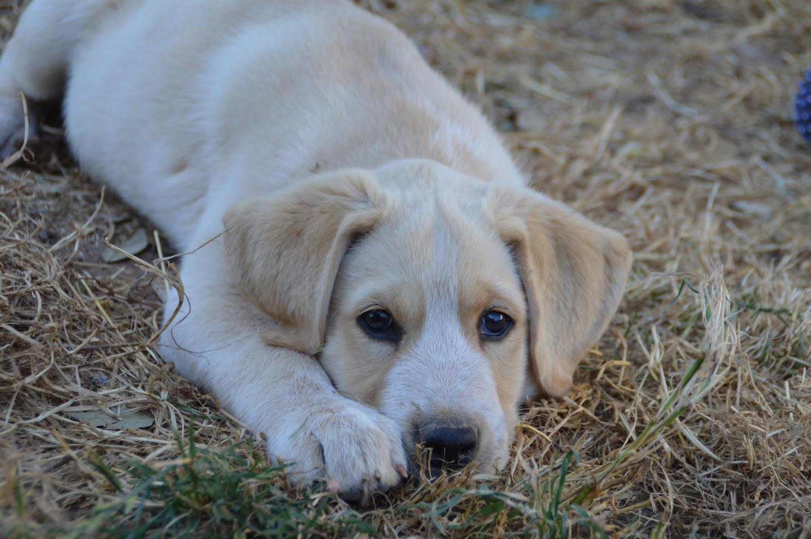 Hunde Aus Zentral Portugal : hunde aus zentral portugal adoptieren brutus ~ Lizthompson.info Haus und Dekorationen