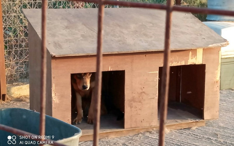 """Αυτόνομη Κίνηση Πολιτών Ορεστιάδας: Πολύ ακριβά τα """"σπιτάκια σκύλου"""" που προμηθεύτηκε ο Δήμος Ορεστιάδας"""