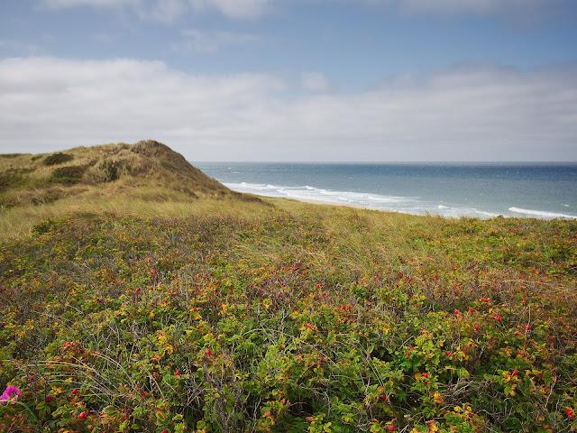 Blick über die Dünen auf die Nordsee