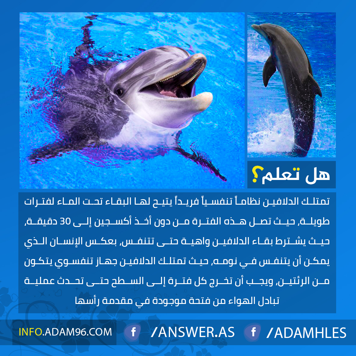 معلومات مدهشة عن الدلافين