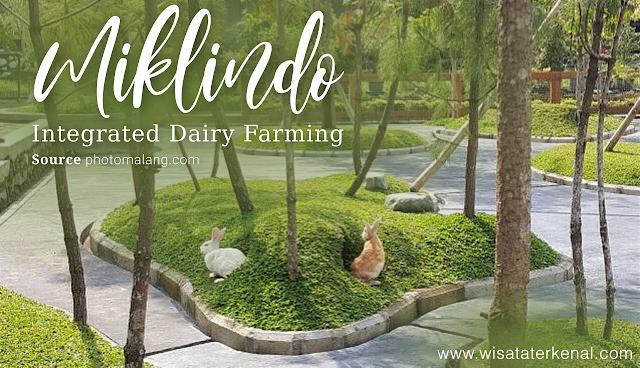 Taman Kelinci Milkindo Green Farm Malang