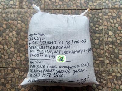 Benih Padi Pesanan CASNOTO Indramayu, Jabar.   (Setelah di Packing).