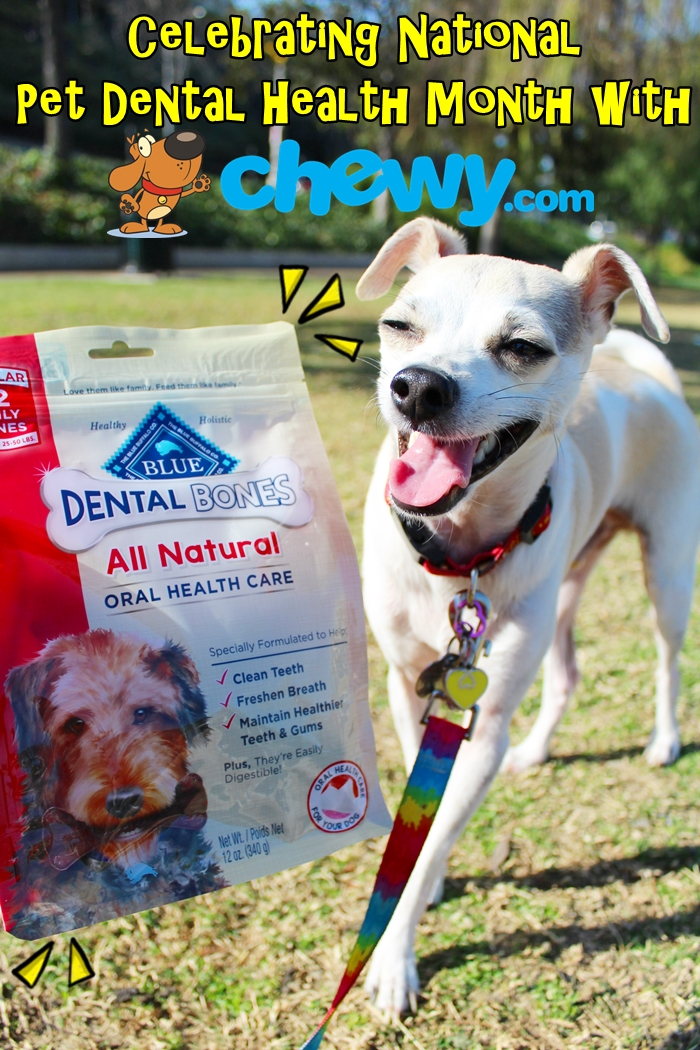 National Pet Dental Health Month with Chewy.com