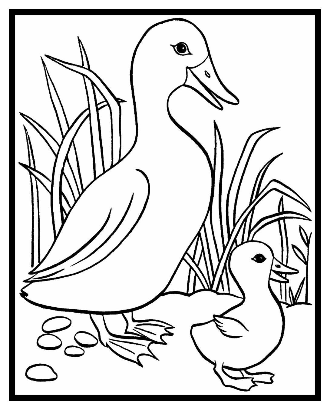 Schöne Dinge Malvorlagen Ente