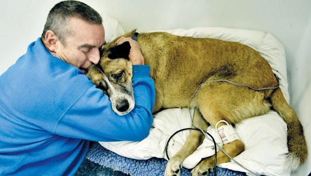 Письмо ветеринара человеку, который положил гвозди в пищу собаке