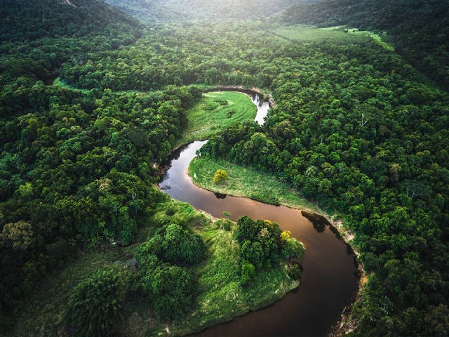Amazon Rainforest, Brazin