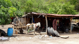 Horse for sale in Nicaragua