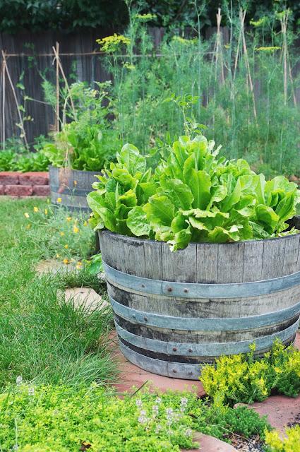 gardening, edible landscaping, urban farming, Jayme Marie Henderson