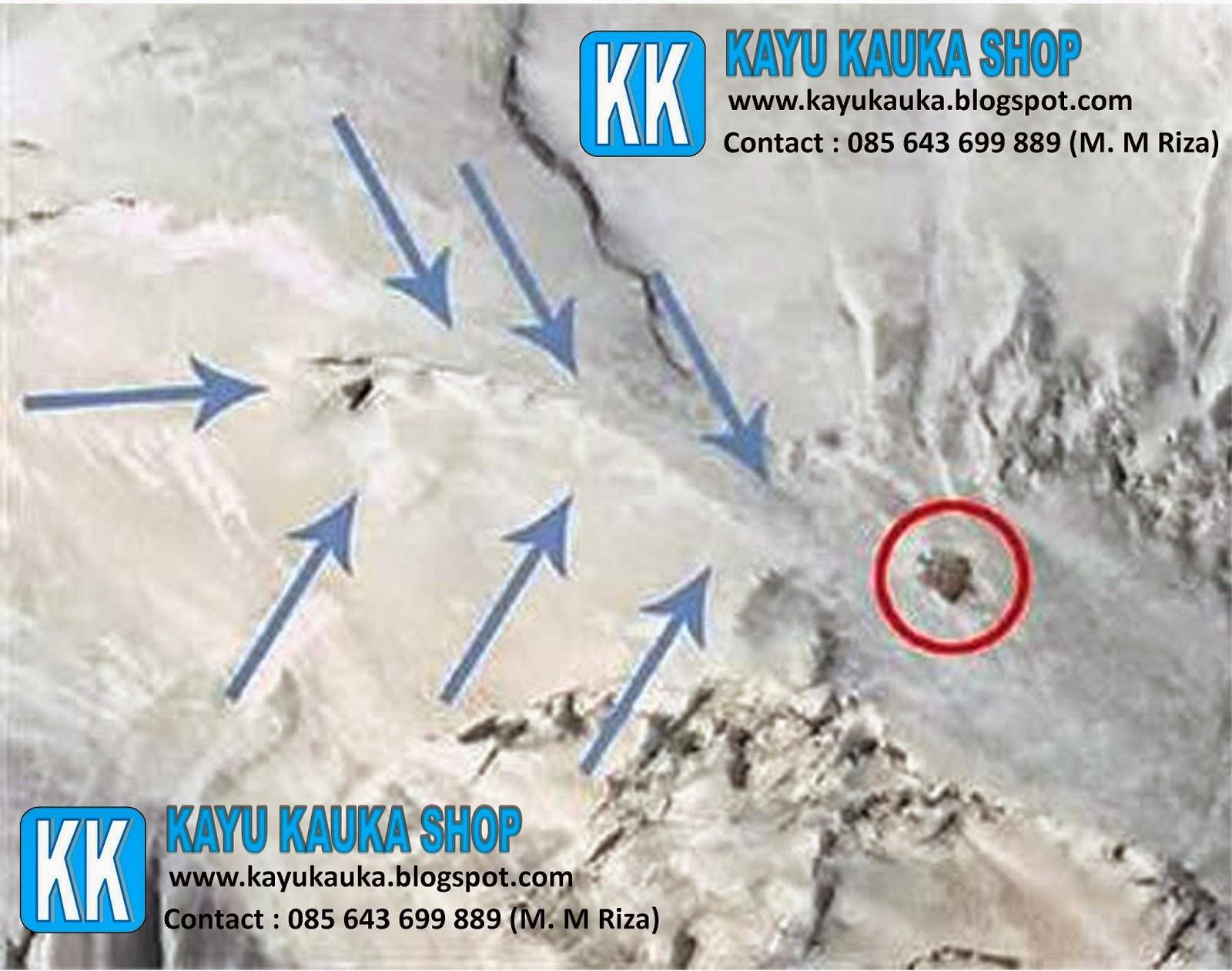 Sejarah Kayu Kokka