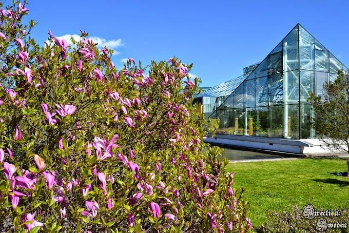 Ogród botaniczny w Sztokholmie