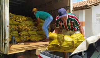 Mudas de palma garantem segurança alimentar do rebanho na Chapada Diamantina