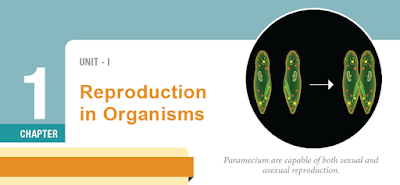 CLASS 12 BIOLOGY ZOOLOGY - CHAPTER 1 REPRODUCTION IN ORGANISMS - 1 MARK QUESTIONS - ONLINE TEST