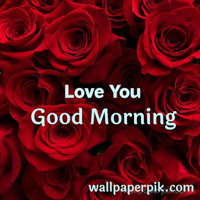 rose leaf rose petals good morning wallpaper download