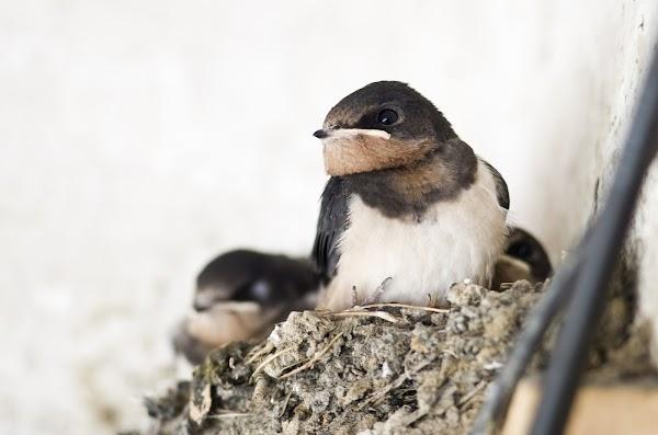Cara Budidaya Ternak Burung Walet Paling Gampang Dan Sederhana Di Rumah Agribisnis Agrokompleks