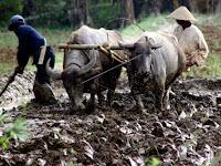 6 Negara dengan Pertanian Terbaik di Dunia, Adakah Indonesia?