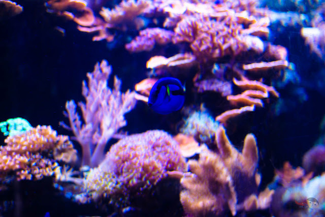 Finding Dory in Ocean Park Hong Kong