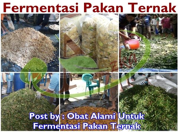 Obat Alami Untuk Fermentasi Pakan Ternak