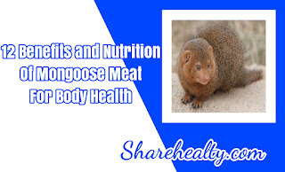 12 Benefits and Nutrition of Mongoose Meat for Body Health