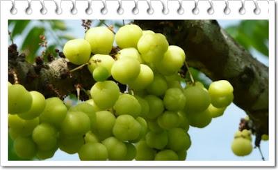 manfaat buah cermai