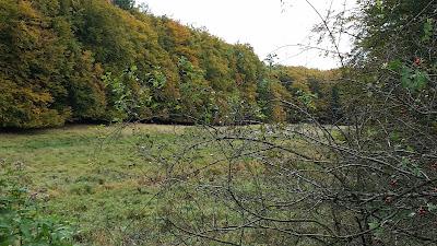 Sumpfgebiet im Nationalpark Jasmund